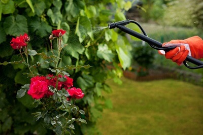 Garden Maintenance in Bournemouth and Dorset