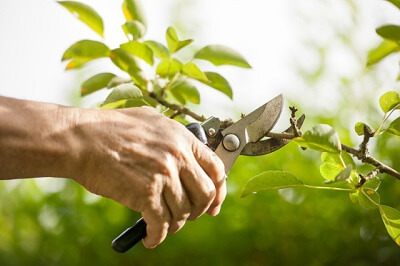 Weeding and pruning services in Bournemouth and Dorset
